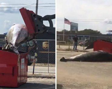 Polícia Deixa Baleia Morta No Caixote Do Lixo De Um Parque De Estacionamento 1
