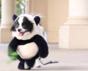 Provavelmente a Roupa Para Cão Mais Engraçada Que Já Viu 21