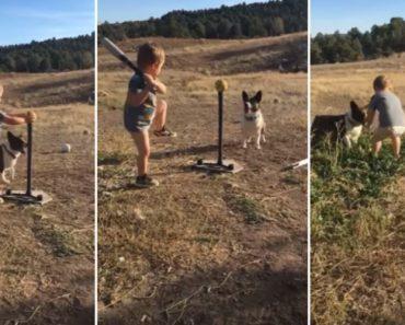 Menino De 2 Anos Arranjou o Companheiro Perfeito Para Treinar Baseball 4