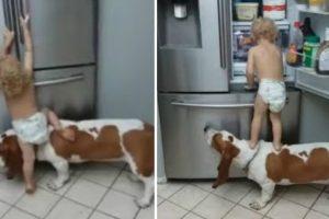 """Bebé e Cão Trabalham Em Equipa Para """"Assaltar"""" Frigorífico 10"""