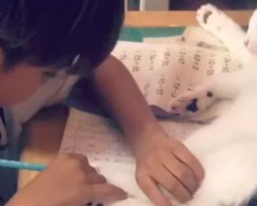 Menino Esforça-se Em Concentrar-se Nos Trabalhos Da Escola, Mas o Seu Adorável Gato Não Facilita 1