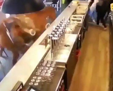Cavalo De Corrida Entra Num Bar e Põe Todos Os Clientes a Correr 2