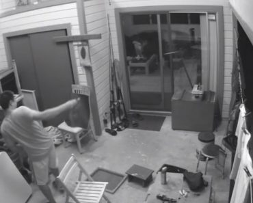 Homem Tenta Atingir Traça Com Chave De Fendas e Acaba Por Partir Vidro Da Porta 9