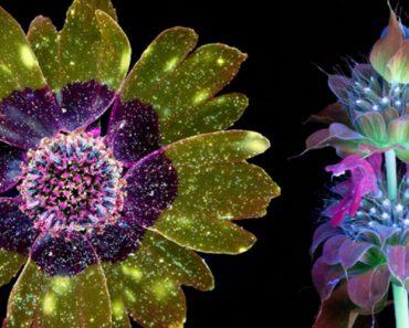 Fotos Extraordinárias Capturam As Luzes Invisíveis Que As Flores e Plantas Emitem 8