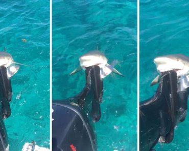 Tubarão Morde Motor De Barco De Pescador e Recusa-se a Soltá-lo 2