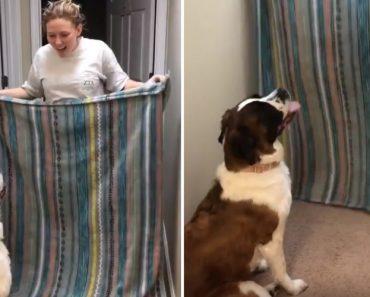 Dona Dá-se Mal Ao Tentar Fazer Truque De Magia Para o Seu Cão 7