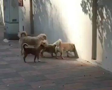 Ninguém Sabe o Que Está Atrás Do Muro, Mas Pelo Empenho Destes Cães Deve Ser Muito Importante 9