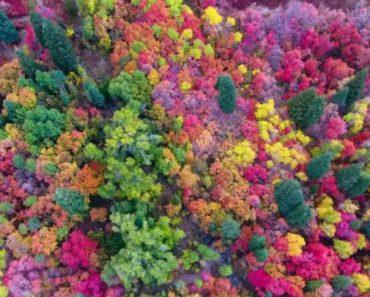 Drone Capta A Incrível Beleza Das Cores Vibrantes Do Outono 3