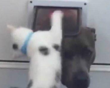 Gatinho Mostra Ao Cão Que Não Tem Permissão Para Usar a Sua Porta 1