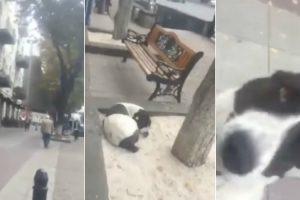 Homem Encontra o Seu Cão Na Rua Após 3 Anos Perdido 5