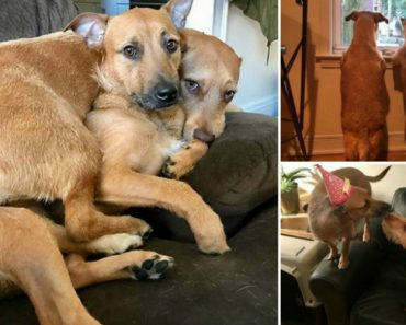 """Cão Encontra o Seu """"Gémeo"""" Na Rua e Convence Dona a Adotá-lo Também 2"""