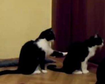 Gato Tenta Pedir Desculpa Ao Amigo Mas... Mas Teve De Tomar Uma Medida Extrema 1