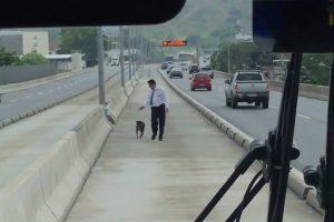 Motorista Pára Autocarro e Resgata Cão Abandonado Em Movimentada Estrada 10