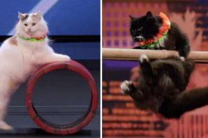 Gatos Fazem Surpreendente Performance No America's Got Talent 10