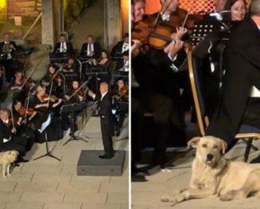 Cão De Rua Rouba Protagonismo Dos Músicos Ao Invadir Concerto Ao Ar Livre 6