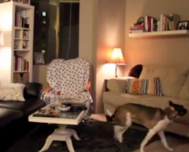 Esta Dona Ficou a Saber o Que o Seu Cão Faz Quando Está Sozinho. Coitada... 5