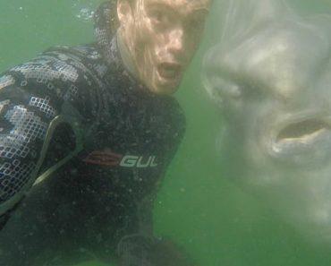 Peixe-Lua Junta-se a Mergulhadores Para Selfie Inesquecível Na Cidade Do Cabo 1