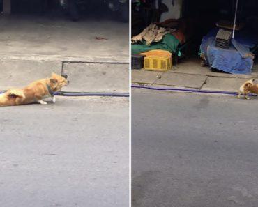 Inteligente Cão Finge Ter Deficiência Nas Patas Traseiras Para Obter Comida 1