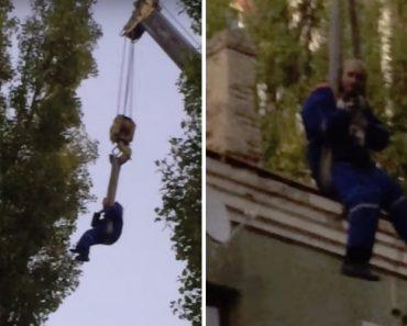 Homem Pendurado Em Grua Salva Gato Que Ficou 3 Dias No Topo De Uma Árvore 6