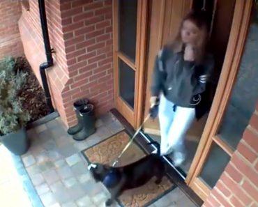 Dona Não Estava Preparada Para Um Passeio Tão Difícil Quando Saiu De Casa Com o Seu Cão 7