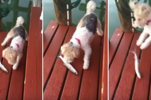 Cão Assusta-se Ao Conhecer Um Peixe Pela Primeira Vez 5