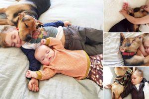 Mãe Regista Sestas Diárias De Filhos Com Cão... Bonito Demais Para Descrever Por Palavras! 10