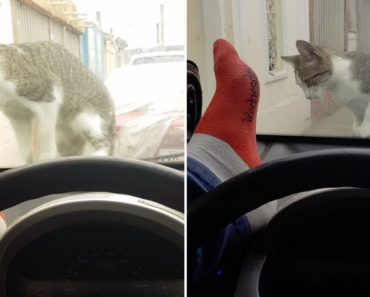 O Que Acontece Quando Um Idiota Tenta Assustar Um Gato 1