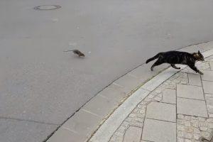 Gato e Rato Invertem Os Papéis Após Ficarem Frente a Frente 9