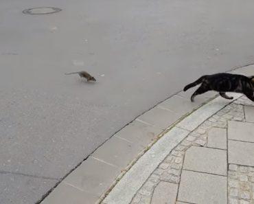 Gato e Rato Invertem Os Papéis Após Ficarem Frente a Frente 8