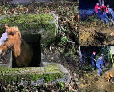 Bombeiros Resgatam Cavalo Preso Num Aqueduto Em Arcos De Valdevez 8