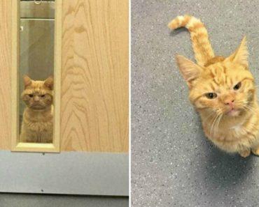 Conheça o Saul... o Gato Que Parece Estar Sempre Mal Humorado! 3
