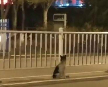 Cão Espera Há Quase Três Meses Na Estrada Em Que a Dona Morreu Atropelada 2