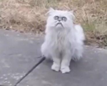 Homem Fica Histérico Ao Ver Estranho Gato à Porta Da Casa Da Mãe 8