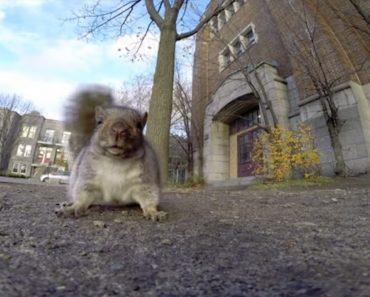 Ele Só Queria Filmar o Esquilo e Teve a Maior Surpresa De Sempre 4