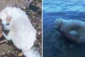 Incrível Vídeo Mostra Momento Em Que Cão Salva Cria De Veado De Afogamento 5