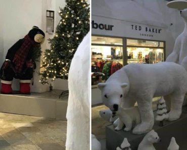 Posição De Ursos Polares Em Exposição De Natal Surpreende Clientes De Centro Comercial 3
