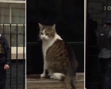 Gato Rouba As Atenções Durante Direto Sobre Brexit Ao Receber Ajuda De Polícia Para Entrar Em Casa 7