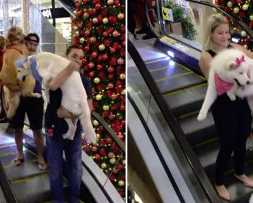 Neste Centro Comercial Os Seus Clientes Puderam Entrar Com Os Seus Animais De Estimação 2