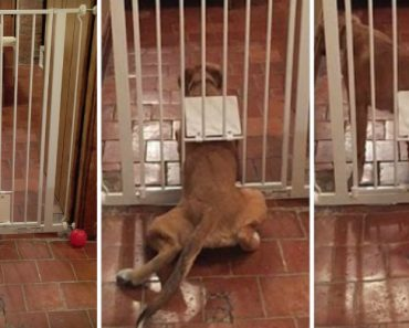 Missão Impossível Na Versão Canina 5