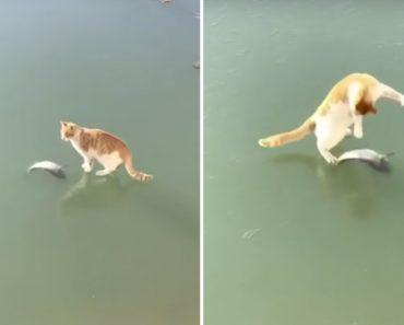 Gato Encontra Peixe Debaixo De Lago Gelado e Tenta Desesperadamente Apanhá-lo 7