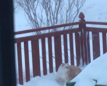 Incrível o Que Este Gato Faz Para Entrar Em Casa 7