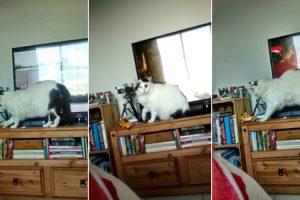 Afinal Ainda Existem Gatos Obedientes 10
