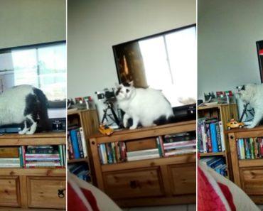 Afinal Ainda Existem Gatos Obedientes 4