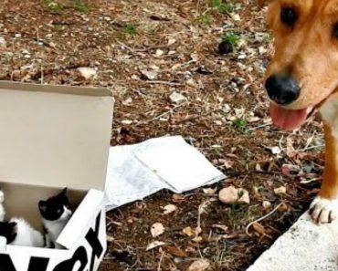 7b79f10333 Cão Encontra Caixa Com Gatinhos Abandonados Em Montanha Na Grécia e  Torna-se Pai Adotivo