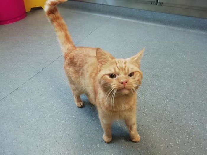 Conheça o Saul... o Gato Que Parece Estar Sempre Mal Humorado! 2