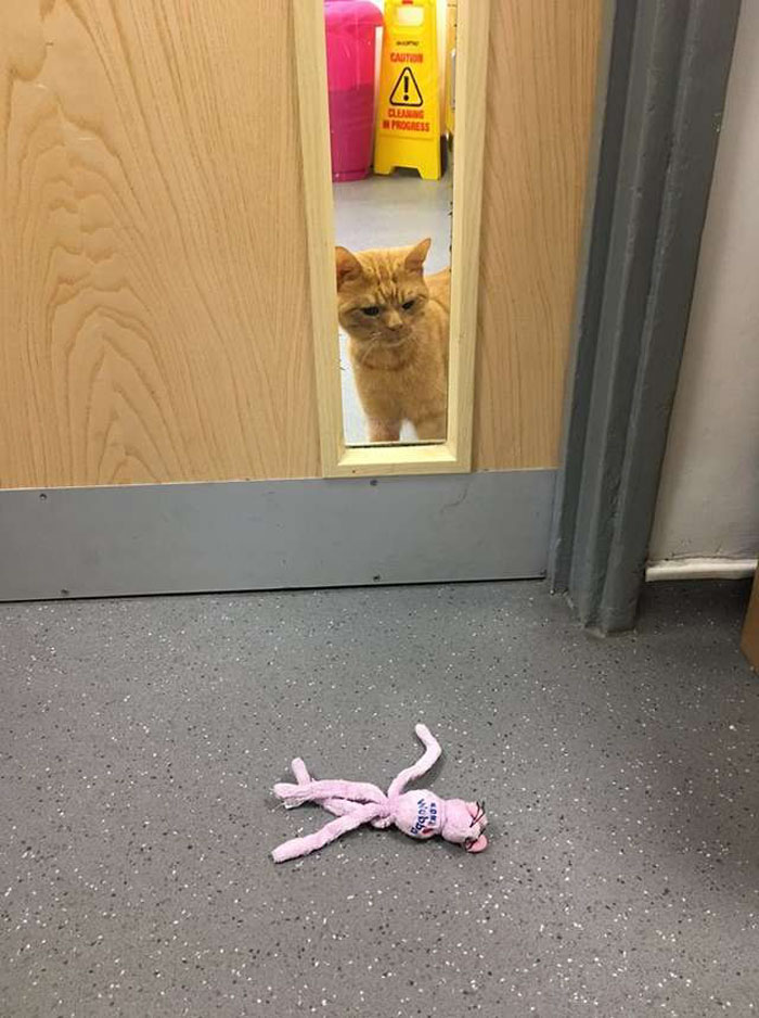 Conheça o Saul... o Gato Que Parece Estar Sempre Mal Humorado! 4