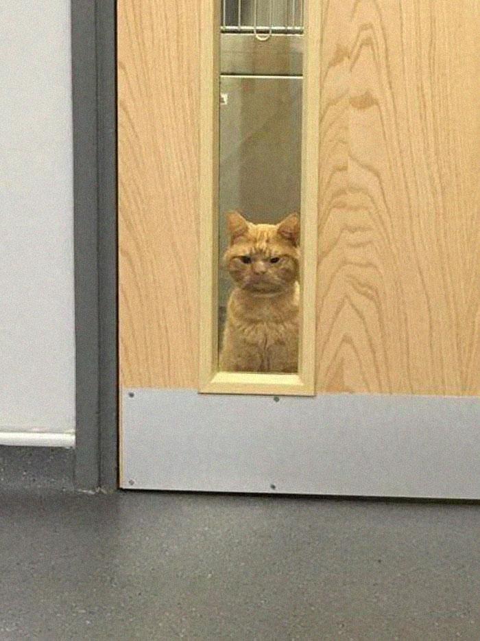 Conheça o Saul... o Gato Que Parece Estar Sempre Mal Humorado! 7