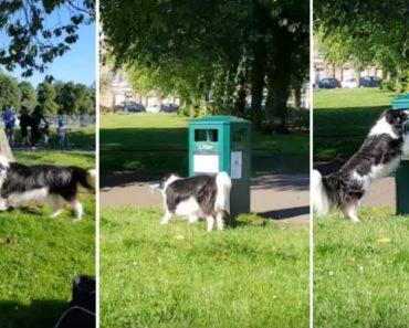 Cão Ecológico Dá Exemplo Ao Mostrar o Que Se Faz Com o Lixo 1
