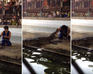 Homem Coloca Braço Dentro Da Boca De Crocodilo e Tem o Susto Da Vida Dele 21