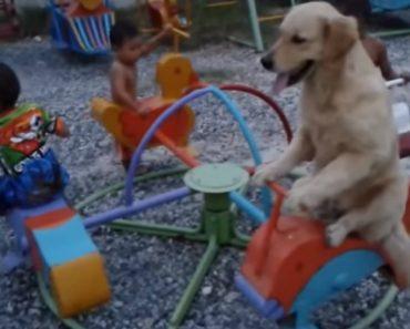 O Que Os Cães Fazem Para Agradar Aos Seus Pequenos Donos 3